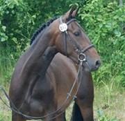 Hest til salg - Nikoline