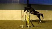 Hest til salg - LILLEVANGS GATWIN