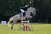Hest til salg - SILVER