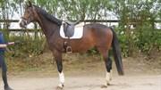 Hest til salg - TRENDMAKER
