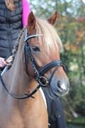 Hest til salg - MATTI
