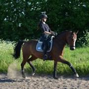 Hest til salg - LYKKEHØJS SOPHEE