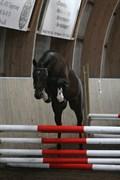 Hest til salg - MADONNA LINDEBJERG