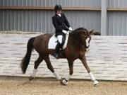 Hest til salg - DON ROMEO COLLIENTE