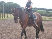 Hest til salg - MADONNA