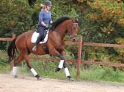 Hest til salg - SVANEGAARDENS LA'SINI