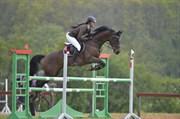 Hest til salg - LUCY 631