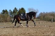 Hest til salg - MELISSA