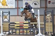 Hest til salg - ARD CHUAN SPECIAL