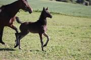 Hest til salg - RGS Finest Alegra