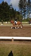 Hest til salg - LE'QUA