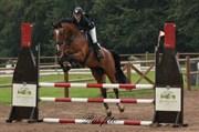 Hest til salg - EGELUNDS COMTESS