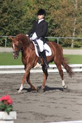 Hest til salg - DORAN