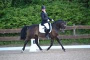 Hest til salg - ELMHOLTS LY'ON