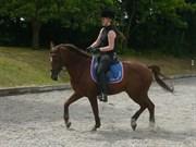 Hest til salg - NØRLUNDS ASCARI