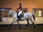 Hest til salg - ARIZONA-L