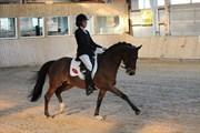 Hest til salg - EDZER