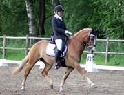 Hest til salg - BLONDIE