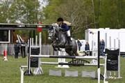Hest til salg - Rebel