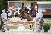 Hest til salg - CLEVERLY