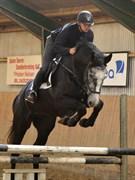 Hest til salg - UNICORN´S LOVE ME TENDER