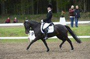 Hest til salg - MANDY