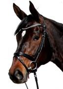 Hest til salg - DONNA DIOR