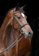 Hest til salg - ROMARIO EG