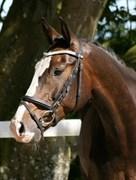 Hest til salg - NEKTONS FLAWLESSDIAMOND