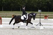 Hest til salg - LORENZO