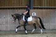 Hest til salg - Egelund Marty