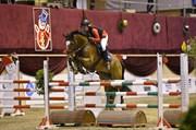 Hest til salg - HEART SPOT