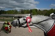 Hest til salg - TOFTEGAARDS HURRICANE