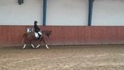Hest til salg - Elle Belle