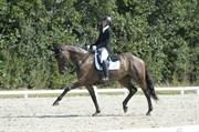 Hest til salg - Hørbjerggårds Chili