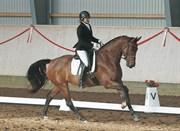 Hest til salg - NYBOGÅRDS TAPAS