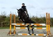 Hest til salg - STARLET