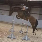 Hest til salg - LORD LOOPING