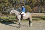 Hest til salg - HIP-HOP'S LA GRENOUILLE