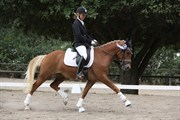 Hest til salg - ROMEO'S GOODWILL