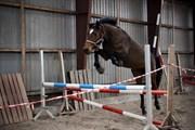 Hest til salg - Colby