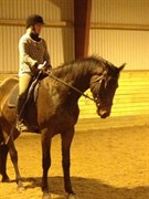 Hest til salg - Sultan