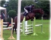 Hest til salg - Locantino