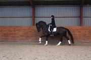 Hest til salg - DISCO FUTURE RV