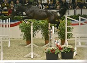 Hest til salg - Larocco Hillock