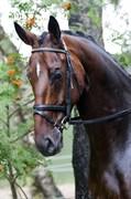 Hest til salg - MAXIM