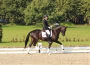 Hest til salg - HOLLYWOOD