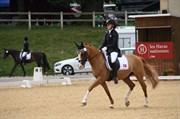 Hest til salg - PROUD DON CARUSO