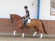 Hest til salg - Michellino
