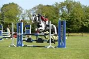 Hest til salg - Dolché